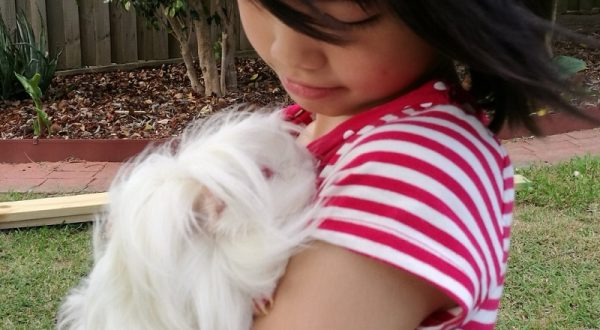guinea pigs as pets, best pets for kids