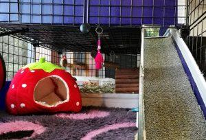 guinea-pig-cage-ramp-guinea-pig-fleece-Vetbed-bedding
