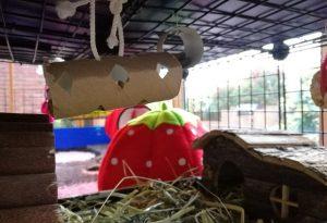 guinea pig toys, guinea pig boredom breakers, boredom busters