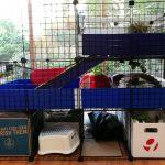 Guinea Pig Cage – C&C Cage Design & Set-Up