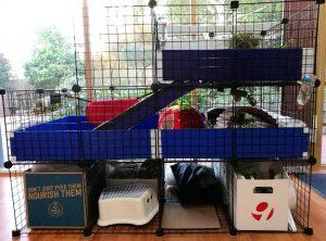 indoor guinea pig cage, C&C cages