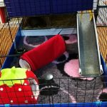 Guinea Pig Bedding Materials – Sieving through the Smelly, the Soggy, the Dusty, the Uncomfy and the Environmentally Friendly