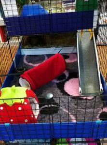 indoor guinea pig cages, guinea pig toys, guinea pig accessories, ramp, fleece hidey hut, tunnel