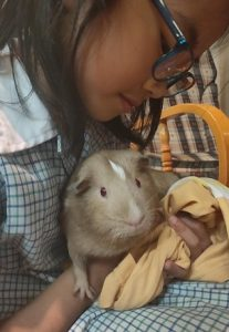 best pets for kids, guinea pigs as pets