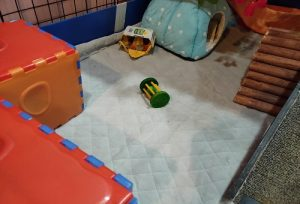 guinea pig toys cage tunnel fleece hut chewable toy